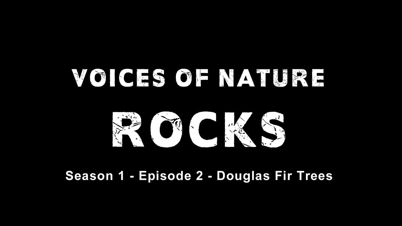 Voices of Nature Rocks   Episode 2   Douglas Fir Trees