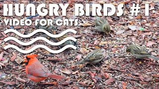 Entertainment Video For Cats. Hungry Birds #1.