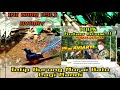 Ngintip Murai Batu Lagi Mandi Aviary Tanpa Tepi  Mp3 - Mp4 Download