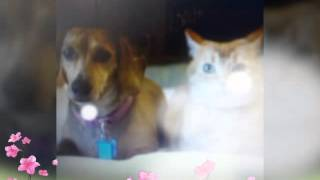 Фото собак и кошек