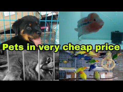 Crawford Market Mumbai |Pets in Cheap Price.