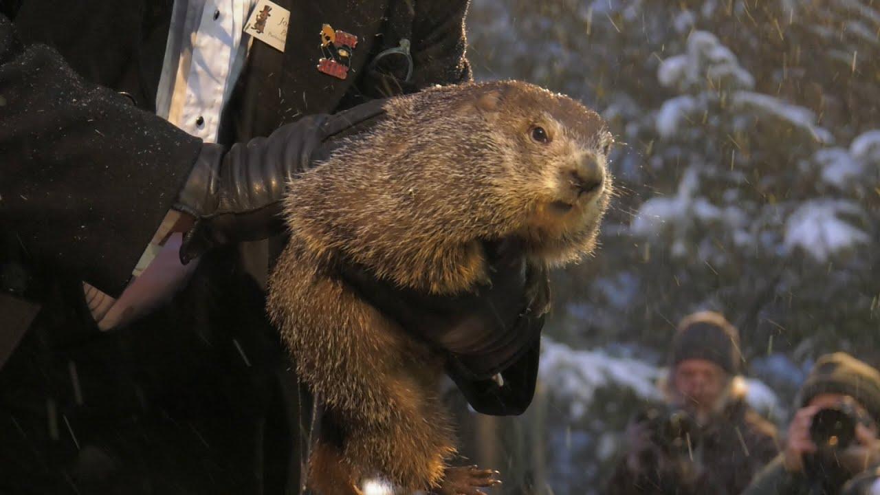 Groundhog Day 2020: Punxsutawney Phil Predicts Early Spring