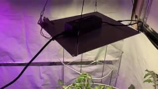 Viparspectra 300 vs. HLG 65 Quantum Board - Week 16