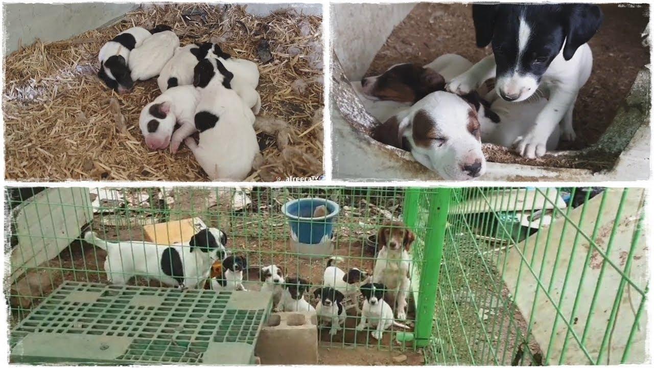 갓 태어난 강아지 70일 성장기록 (심쿵주의, 귀염귀염)