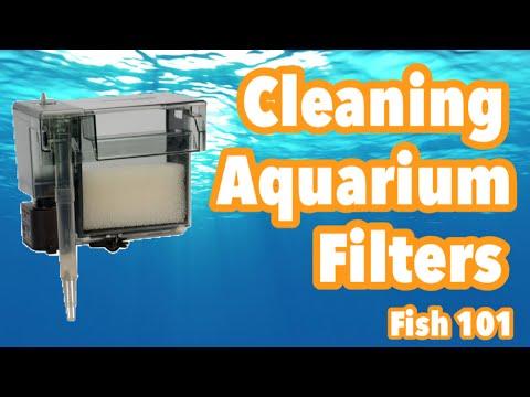 How to clean your aquarium filter (Fish 101)