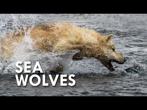 Sea Wolves: When Mammals Go to Sea