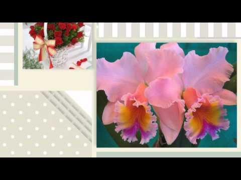 Картинки цветов, обои цветы на рабочий стол