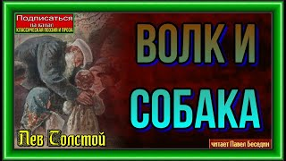 Волк и собака  Лев Толстой    читает Павел Беседин