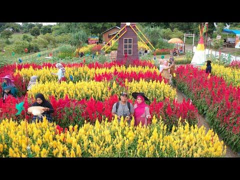 wisata-taman-bunga-celosia-friend-kabupaten-bireuen,-recomended-untuk-prewedding
