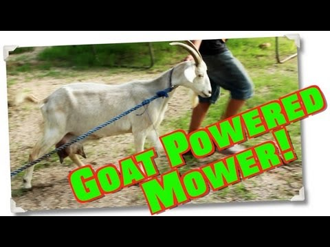 Free Lawn Mower Service Mow Grass Amp Kill Weeds Without