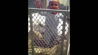 Climbing His Play Yard Gate