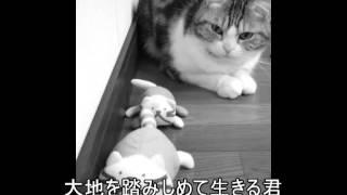 森恵さんの曲をvocaloidのMeguさんに歌ってもらいました。出演はウチの...