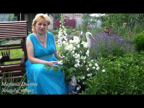 Выбираем цветущие декоративные кустарники для дачи: фото гид