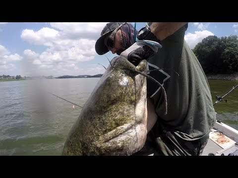 Catching A HUGE Catfish In Very SHALLOW WATER