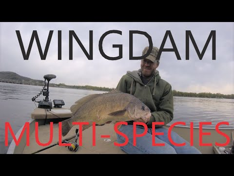 Wingdam Multi-species - Fishing Mississippi River Wing Dams For A Variety Of Fish Species