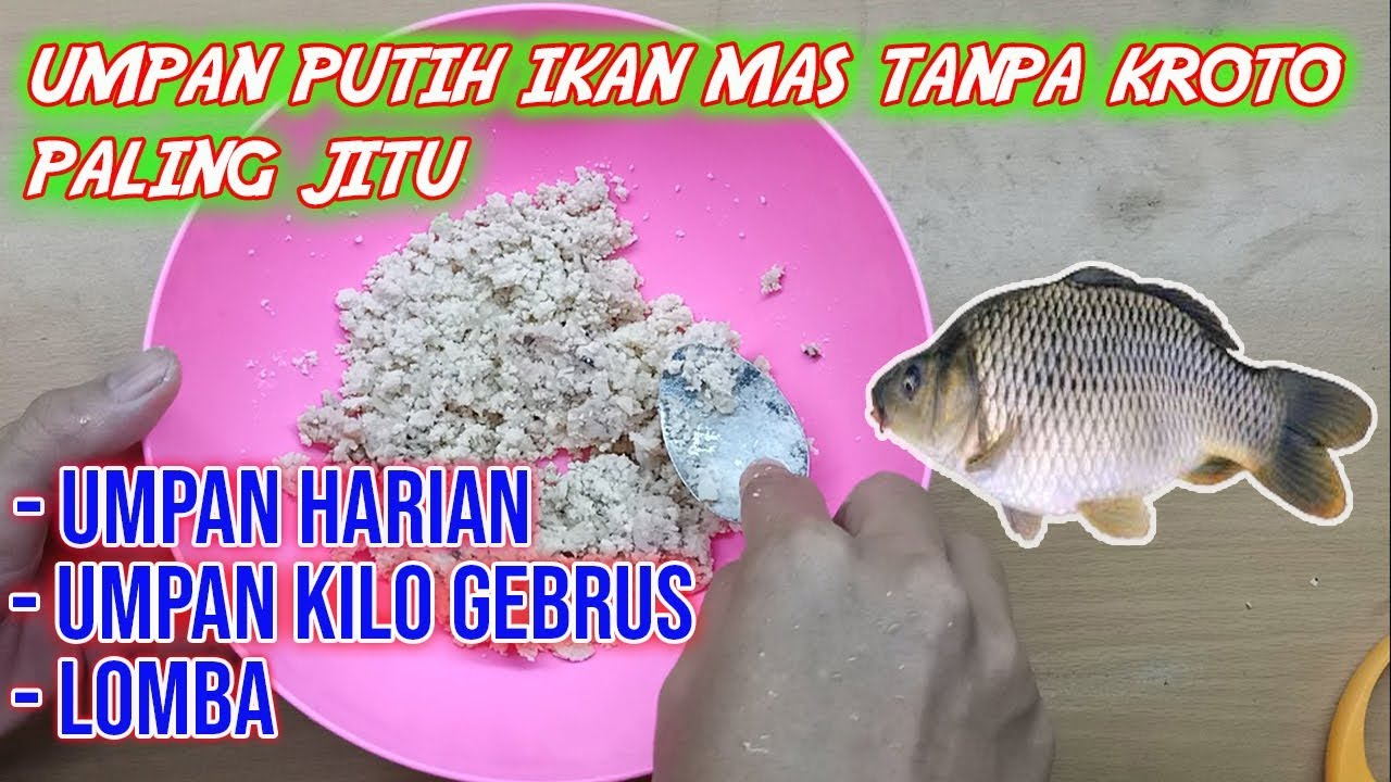 Umpan Putih Ikan Mas Tanpa Kroto Paling Jitu Harian Lomba Kilo Gebrus Youtube