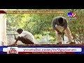 Gandhinagar: Preparations Underway At Indroda Park To Bring Pair Of Lions From Gir- Tv9