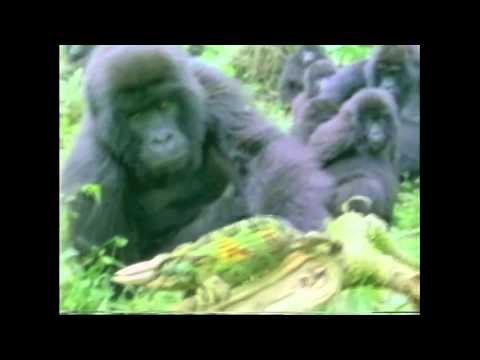Amazing Animals: Animal Giants (Part 2 of 2)