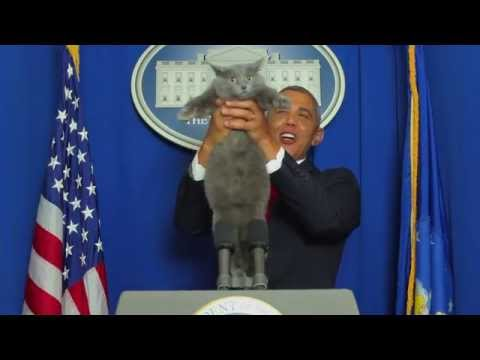 Official Video: Cat Interrupts President Obama's Speech