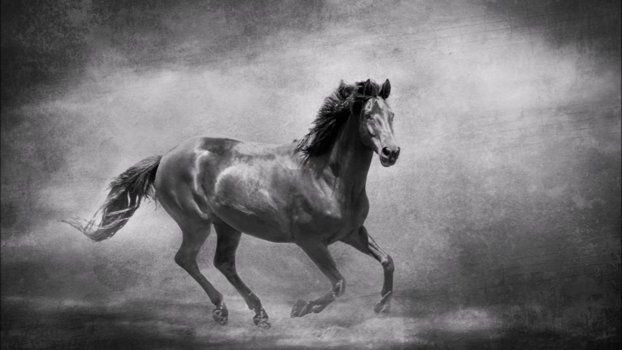 Black White Fine Art Horse Photography By Michelle Wrighton Youtube