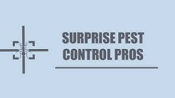 Surprise Pest Control Pros-Birds And Flying Control Service in Surprise AZ