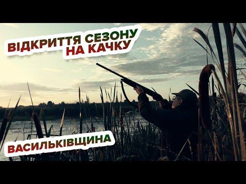 Полювання на качку - відкриття на Васильківщині/ Охота на утку