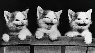 Смешные кошки 13 ● Приколы с животными лето 2014 ● Funny cats vine compilation ● Part 13