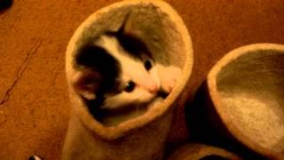 Котята и Валенки