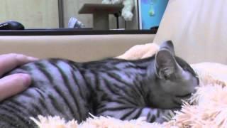 Мурлыкающий котёнок
