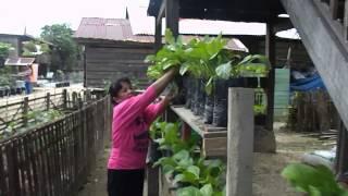 Video Panen Sayur Di Lokasi M-KRPL LPTP SULAWESI BARAT download MP3, 3GP, MP4, WEBM, AVI, FLV Agustus 2018