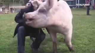 Animales Graciosos  DeVirales