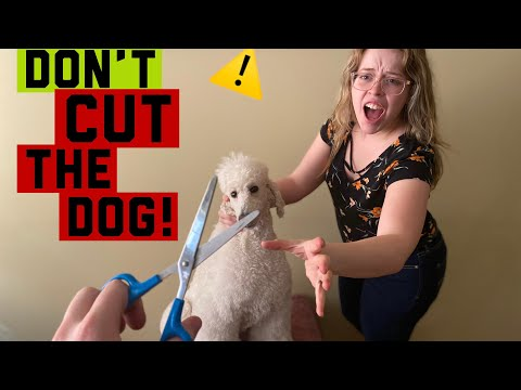 DIY HOME DOG GROOMING TIPS  How to care for your dog during the 2020 pandemic!
