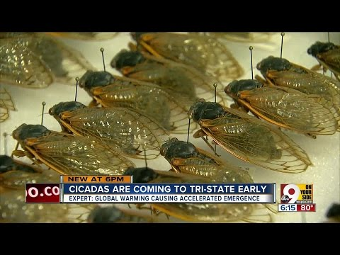 Cicadas are coming to Greater Cincinnati four years early