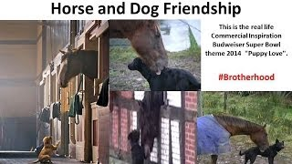 This Real Best Buddies - Horse and Dog Friendship