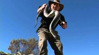 Wildlife Man catches deadly tiger snake