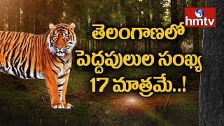 తెలంగాణలో పెద్దపులుల సంఖ్య 17 మాత్రమే..! Tiger Census Cnds in Telangana   hmtv
