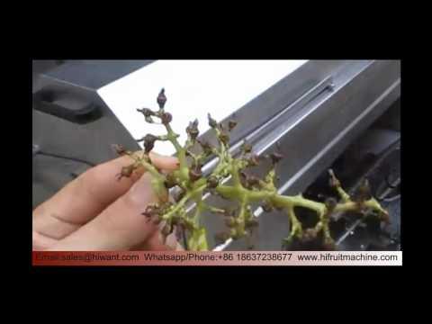 High Quality Grape Destemming And Crushing Machine/grape Crusher/grape Destemmer