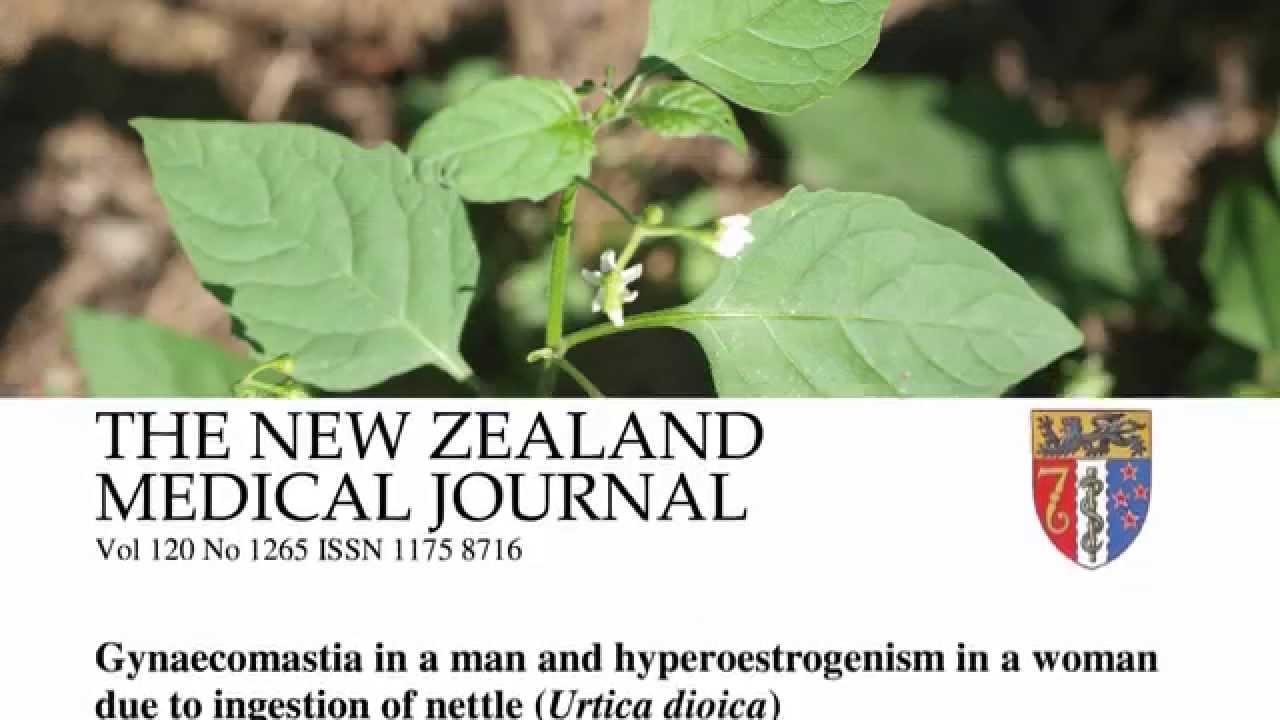 Herbal Tea Update: Rooibos & Nettle
