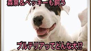 ペットで犬を飼おうと迷っている方へ〜ブルテリア〜 世の中には様々な犬...