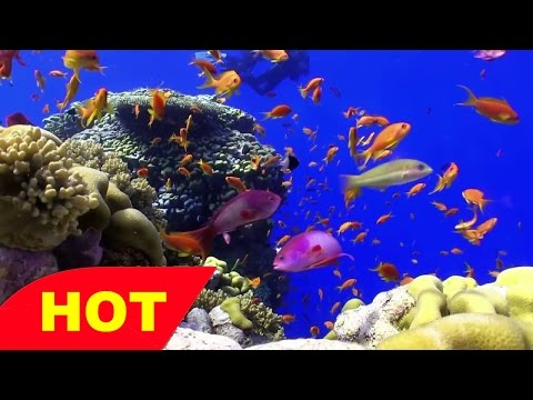Coral Reef Documentary  Life On The Coral Reef   The Greatness Of Ecosystems
