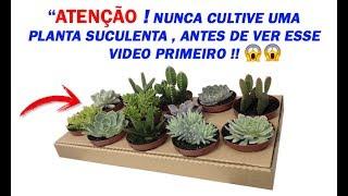 Nunca Cultive Plantas Suculentas – Sem ver Esse Video Primeiro