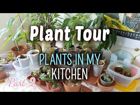 Plant Tour PART 2 | Plants in my Kitchen