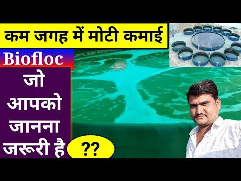 Biofloc फिश फार्म कैसे तैयार करें Fish Farming मैं आने वाली कठिनाइयां व सावधानियां - Agritech Guruji