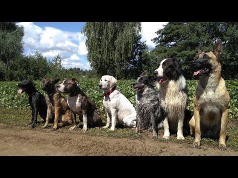 Поэтапный план обучения щенка или взрослой собаки