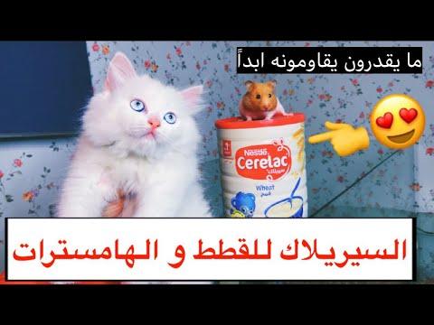 سيريلاك للقطط والهامسترات 😍 مفيد جداً يغذي ويزيد الوزن بشكل واضح 👍🏻 - تغذية القطط / Mohamed Vlog