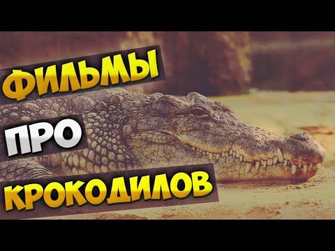 Вопрос: Почему аллигаторы засыпают, если им почесать животик?