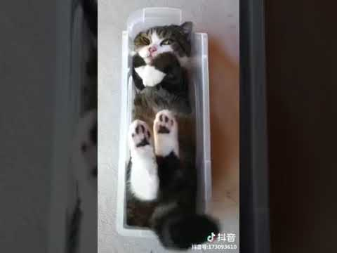 Cat Series: Not sure why this fat cat like the narrow box very much