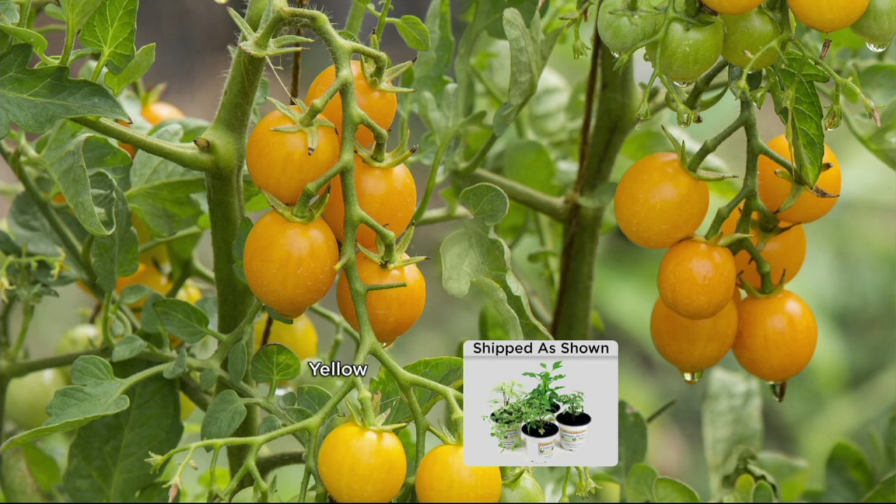 Cottage Farms 4 Pc Patio Garden Vegetable Collection On Qvc