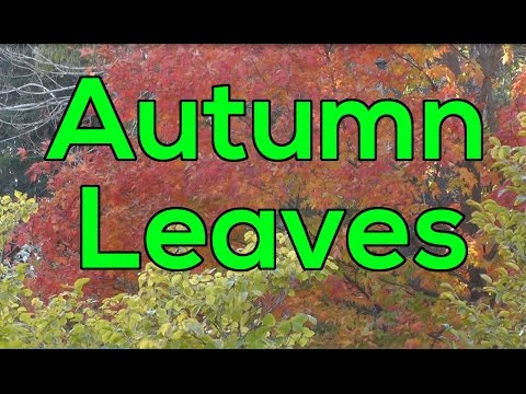 Leaves of Autumn - Watch in HD