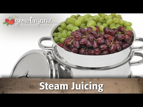 How to Make Juice and Jelly by Steam Juicing